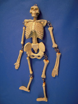 1&quot; Scale Jeannetta Kendall Human Skeleton