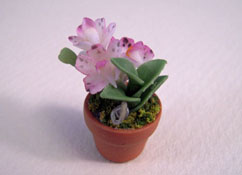 Potted Pink Crocus Plant 1:24