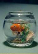 "1"" Scale Gold Fish Bowl"