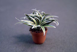 "Falcon 1/2"" Scale Potted Spider Plant"