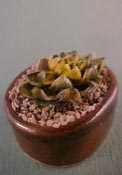 "Tucker's Tiny Treasures 1"" Scale Fancy Cactus Planter"