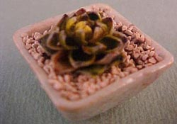 "Tucker's Tiny Treasures 1"" Scale Fancy Cactus Square Planter"