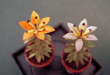 "af04 1/2"" scale potted orange lilies"