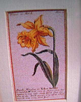 "Mc Bay Miniatures 1"" Scale Framed Yellow Daffodil Print"