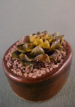 Tucker's Tiny Treasures Fancy Cactus Planter 1:12 scale