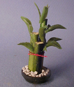 "Alice Zinn 1"" Scale Sprouting Bamboo"